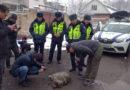 Кайгуул милициясы Бишкектеги мектептин жанынан карышкыр кармады